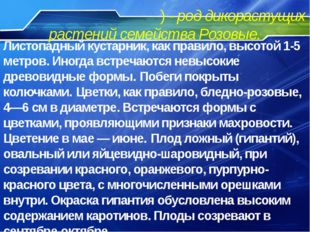Шипо́вник (лат. Rósa) - род дикорастущих растений семейства Розовые. Листопад
