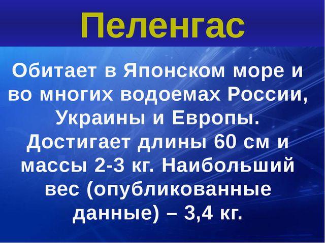 Обитает в Японском море и во многих водоемах России, Украины и Европы. Достиг...
