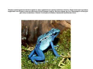 Лягушка голубой древолаз является одним из самых удивительных цветных животны
