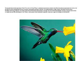 Эта крошечная птичка (размер от 6 до 21 см; вес от 1,6 до 20 гр.) с длинным и
