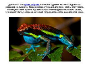Древолаз. Этияркие лягушкиявляются одними из самых ядовитых созданий на пла