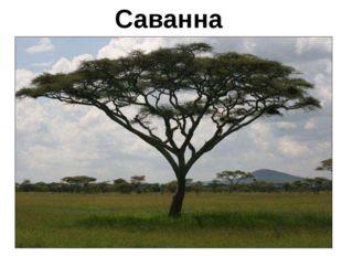 Саванна