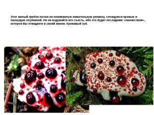 Этот милый грибок похож на пожеванную жевательную резинку, сочащуюся кровью и
