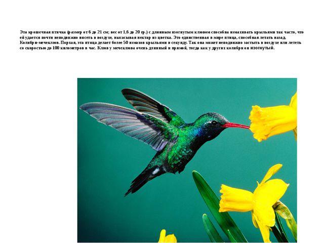 Эта крошечная птичка (размер от 6 до 21 см; вес от 1,6 до 20 гр.) с длинным и...