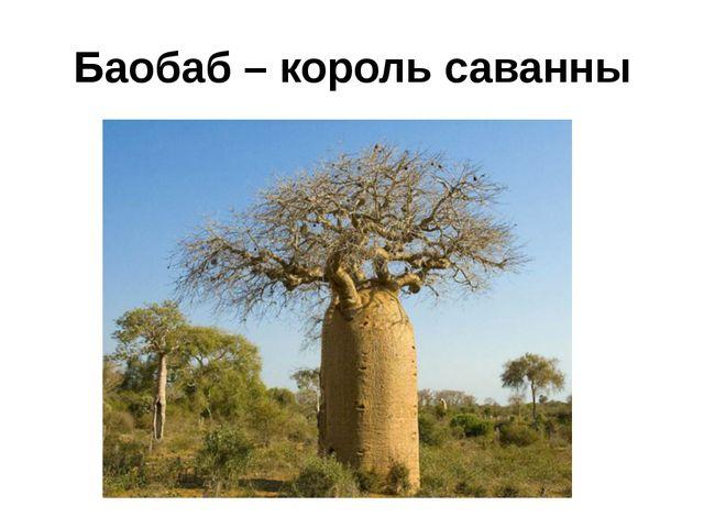 Баобаб – король саванны
