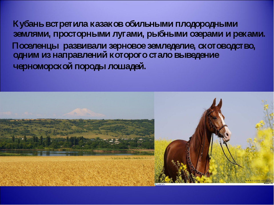 Кубань встретила казаков обильными плодородными землями, просторными лугами,...