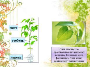«Растения – земли украшения»