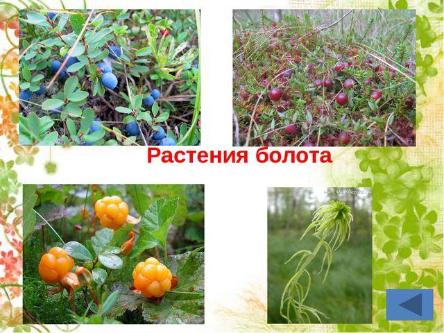 Растения озера