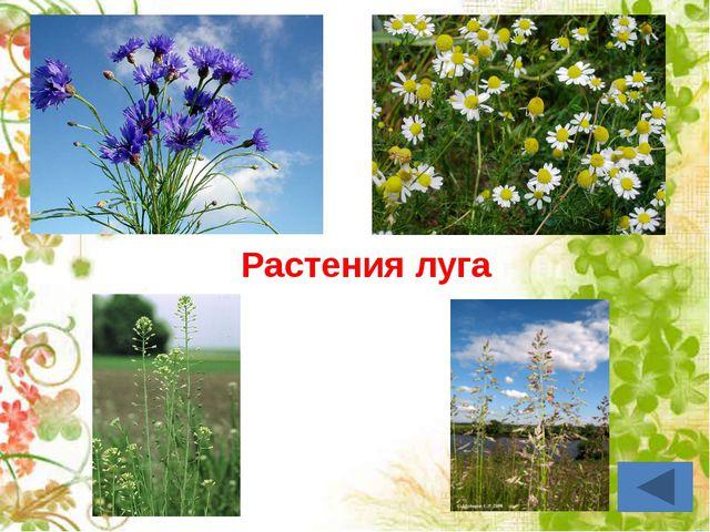Тема урока: «Органы цветковых растений»