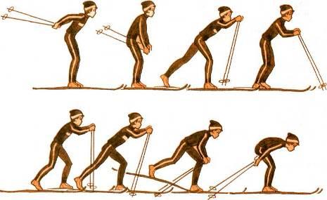 Повторение попеременного двухшажного хода. На лыжне с уклоном 3—4° поочередное скольжение на одной и другой лыже; поочередное скольжение то на одной, то на другой лыже на ровной лыжне без палок, акцентируя внимание на сильный, законченный толчок, активный вынос маховой ноги и поздний перенос тяжести тела; передвижение скользящим шагом с махами руками, держа палки за середину. Выполнение хода в целм в хороших условиях скольжения.