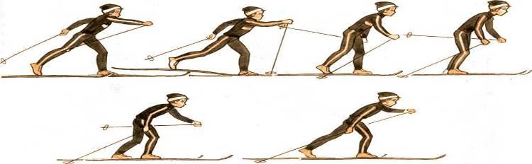 Попеременный двухшажный ход. выполняется следующим образом: с шагом левой ноги вперед выносится правая палка, одновременно левой рукой и правой ногой делается толчок — тяжесть тела переносится на левую ногу. Правая нога после толчка расслабляется и по инерции идет назад-вверх, поднимая пятку лыжи. Туловище при этом наклонено вперед, правая рука заканчивает вынос палки вперед, кисть на уровне плеча Из этого положения лыжник готовится сделать следующий шаг.