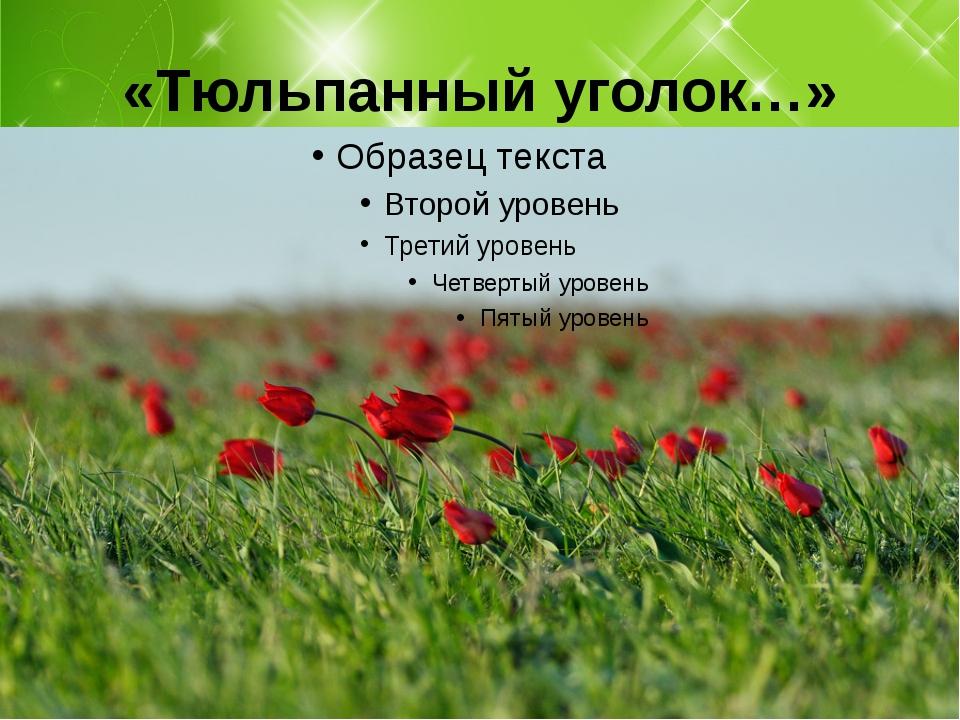 «Тюльпанный уголок…»