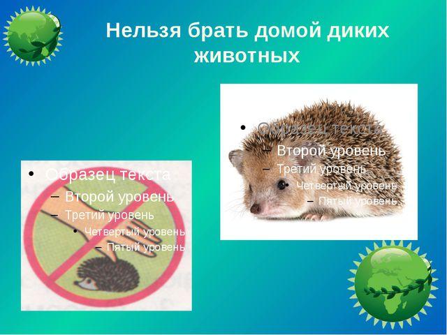 Нельзя брать домой диких животных