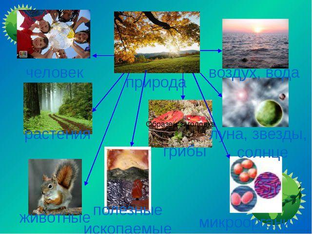 природа человек растения животные микроорганизмы грибы воздух, вода луна, зве...
