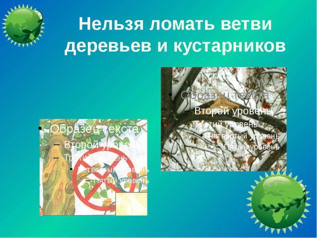 Нельзя ломать ветви деревьев и кустарников