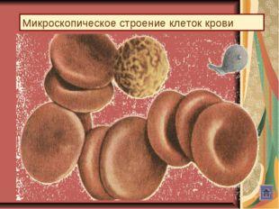 Микроскопическое строение клеток крови