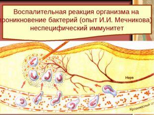 Воспалительная реакция организма на проникновение бактерий (опыт И.И. Мечнико