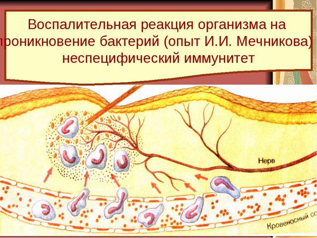 Воспалительная реакция организма на проникновение бактерий (опыт И.И. Мечнико...
