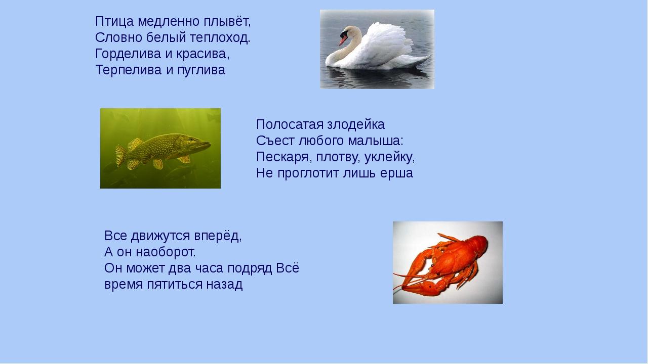 Птица медленно плывёт, Словно белый теплоход. Горделива и красива, Терпелива...