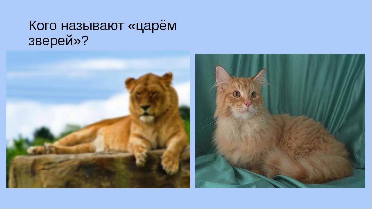 Кого называют «царём зверей»?