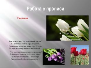 Работа в прописи Тюльпан Как он красив – тот пламенный цветок! На длинном сте
