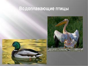 Водоплавающие птицы