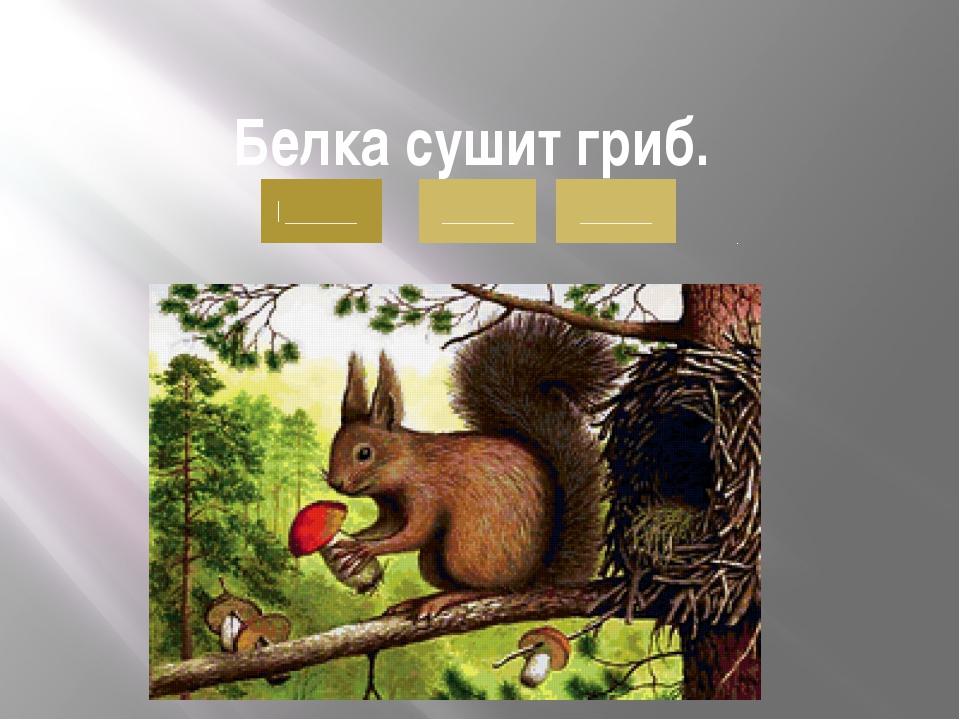 Белка сушит гриб. . ______ ______ ______