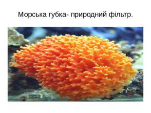 Морська губка- природний фільтр.
