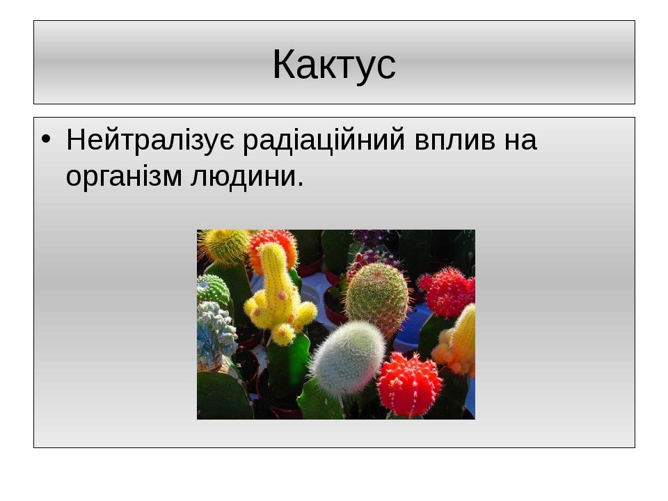 Кактус Нейтралізує радіаційний вплив на організм людини.