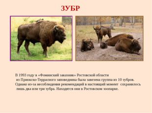 ЗУБР В 1993 году в «Фоминский заказник» Ростовской области из Приокско-Террас
