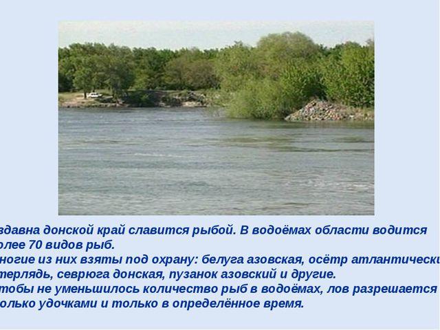Издавна донской край славится рыбой. В водоёмах области водится более 70 видо...