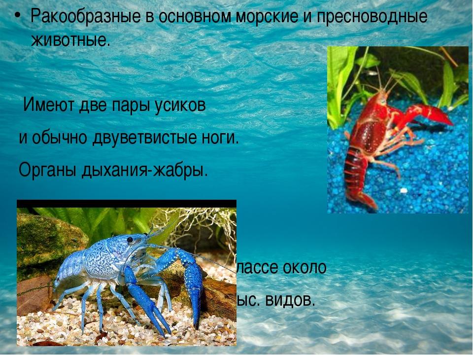 Ракообразные в основном морские и пресноводные животные. Имеют две пары усик...