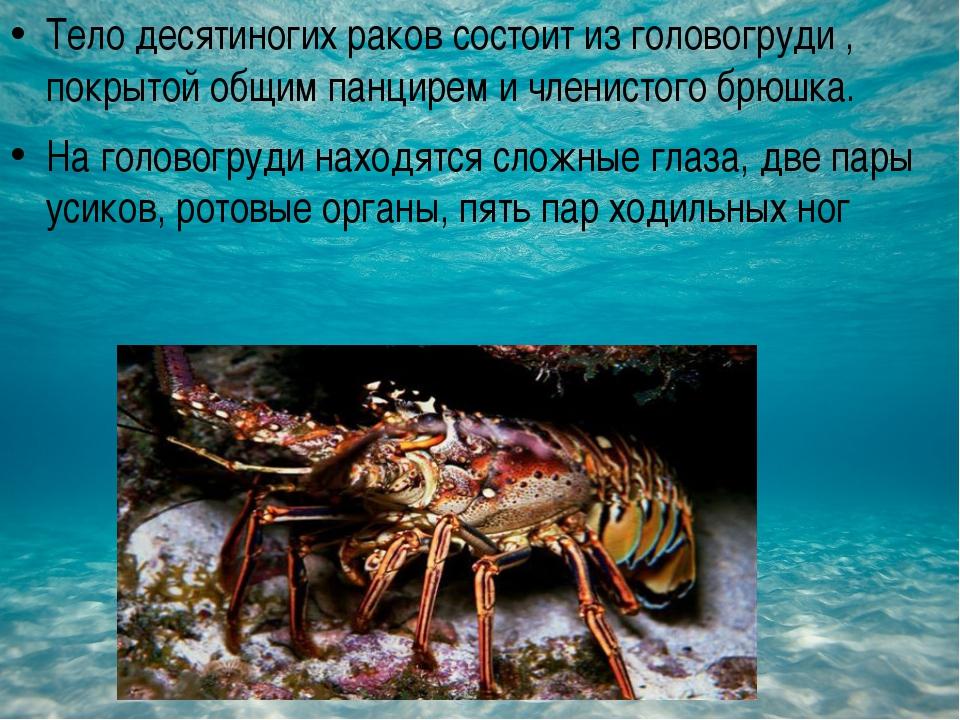 Тело десятиногих раков состоит из головогруди , покрытой общим панцирем и чл...