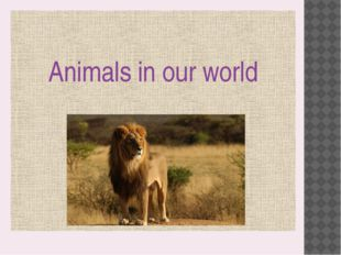 Animals in our world