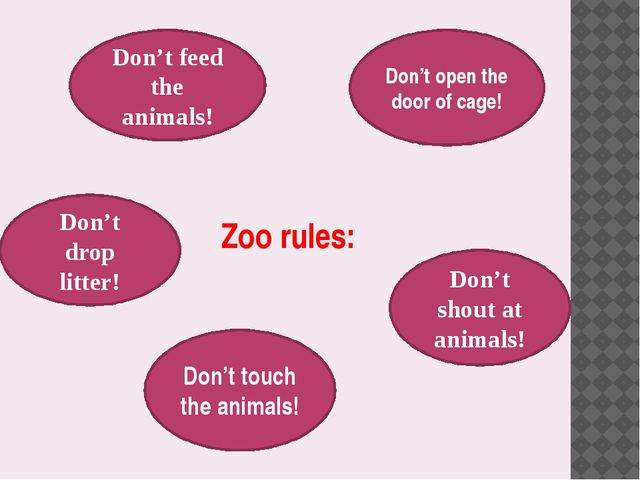Zoo rules: Don't feed the animals! Don't open the door of cage! Don't drop li...