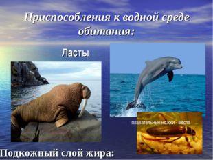 Приспособления к водной среде обитания: Ласты Подкожный слой жира: плавательн