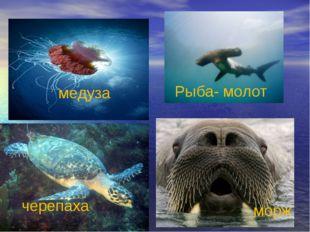 черепаха морж Рыба- молот медуза