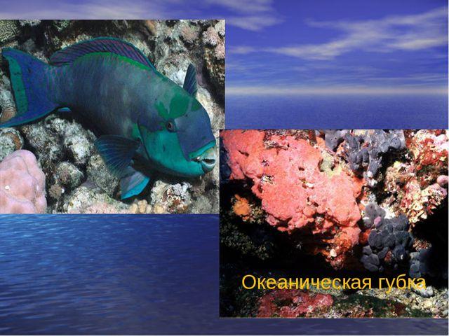 Океаническая губка
