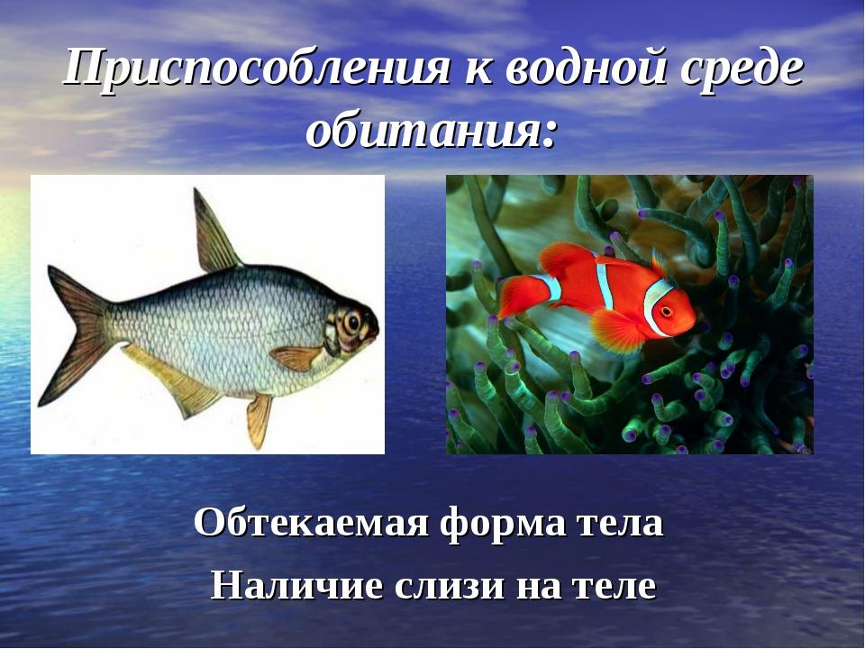 Приспособления к водной среде обитания: Обтекаемая форма тела Наличие слизи н...