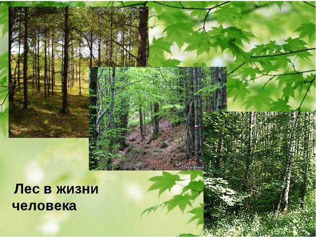 Лес в жизни человека