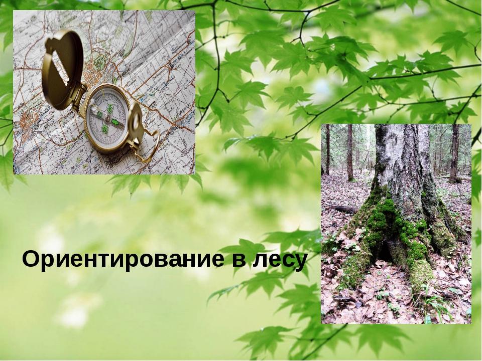 Ориентирование в лесу