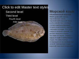 Морской язык Обыкновенный морской язык(дуврскийпалтус, европейская солея, е