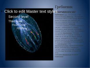 Гребневик мнемиопсис Гребневики(лат.Ctenophora)— типмногоклеточных животн