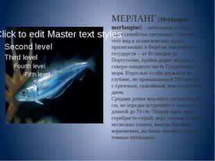 МЕРЛАНГ (Merlangius merlangius)– небольшая стайная рыба семейства тресковых.