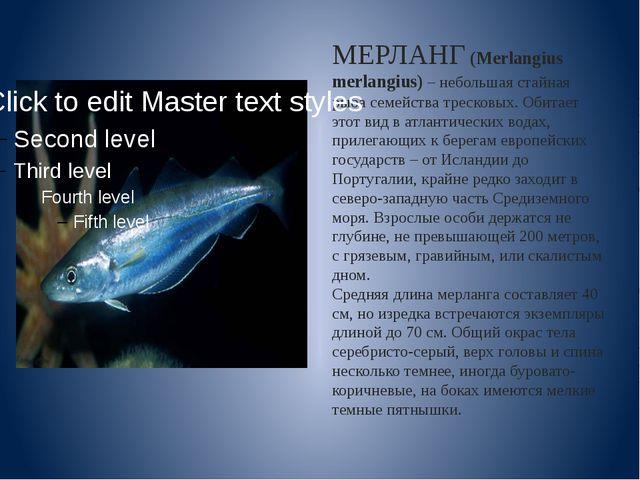 МЕРЛАНГ (Merlangius merlangius)– небольшая стайная рыба семейства тресковых....
