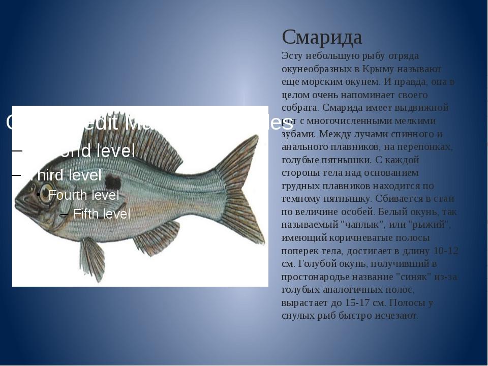 Смарида Эсту небольшую рыбу отряда окунеобразных в Крыму называют еще морским...