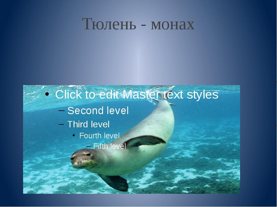 Тюлень - монах