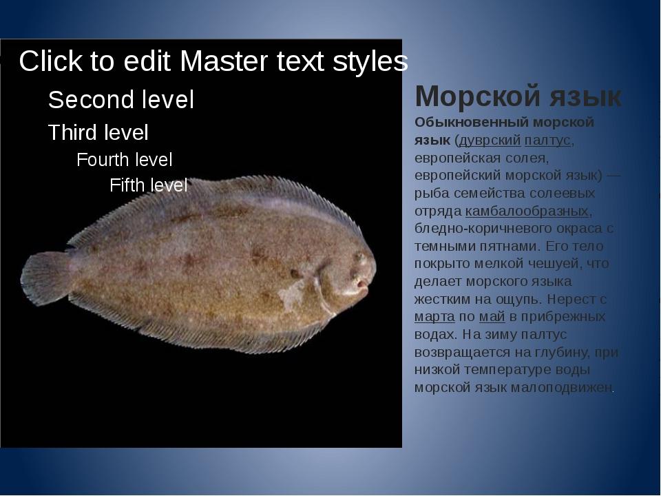 Морской язык Обыкновенный морской язык(дуврскийпалтус, европейская солея, е...