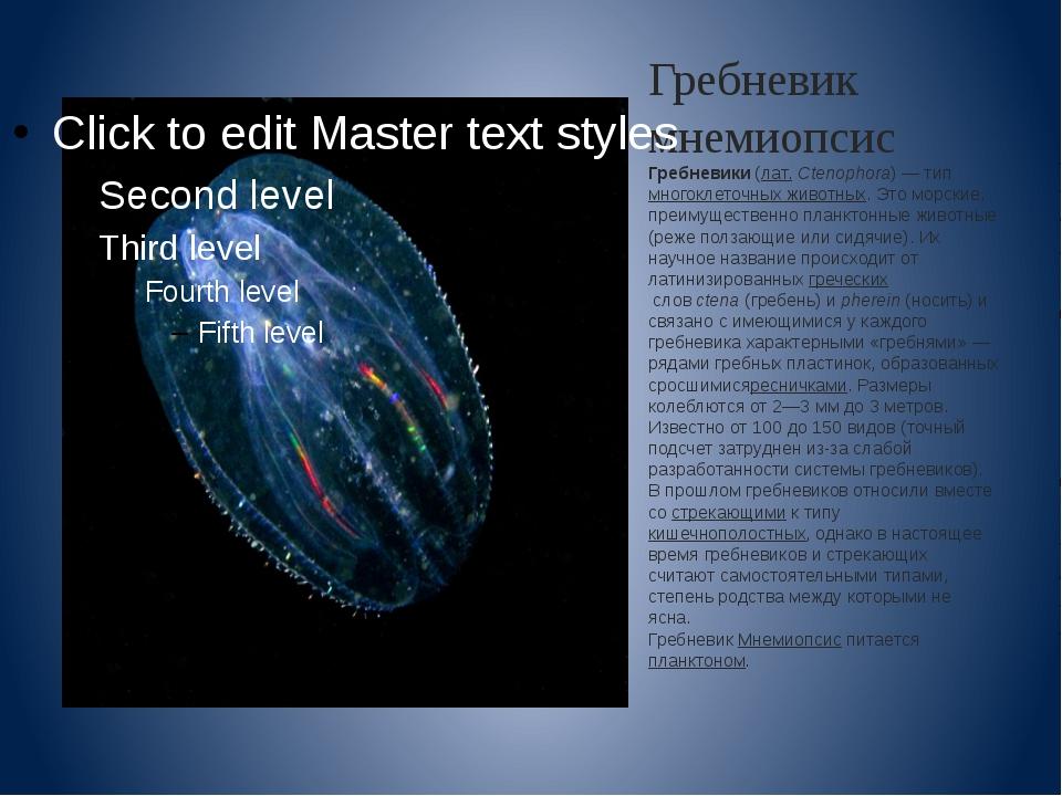 Гребневик мнемиопсис Гребневики(лат.Ctenophora)— типмногоклеточных животн...