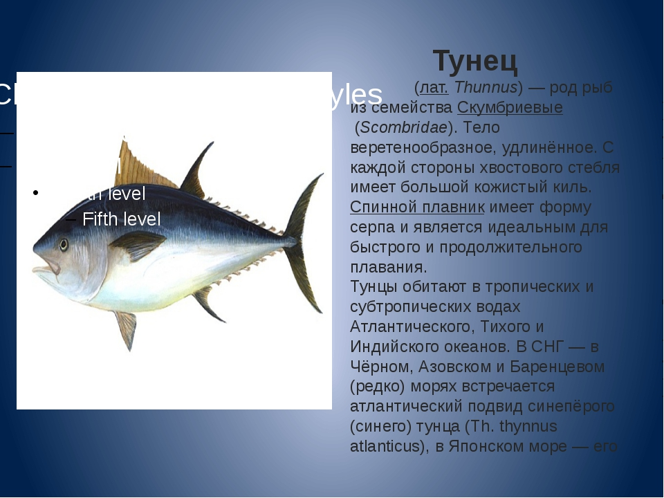 Тунец Тунцы́(лат.Thunnus)— род рыб из семействаСкумбриевые(Scombridae)....